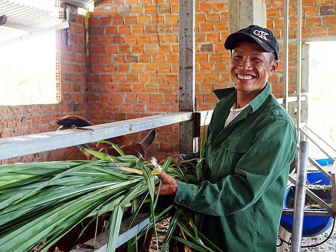 Anh Nguyễn Văn Thụ, một trong năm người bị oan, sẽ tiếp tục công việc cắt cỏ nuôi bò của mình. Ảnh: N.NGA