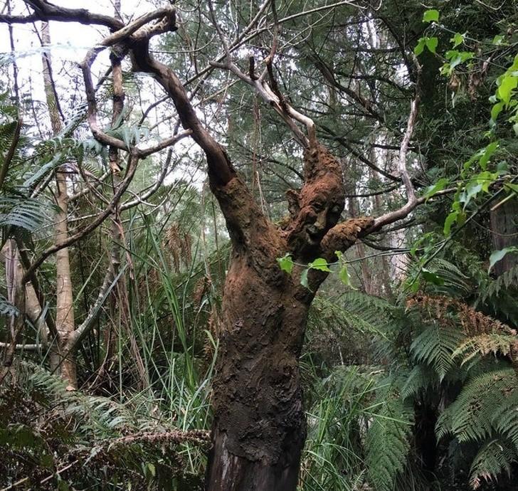 Rõ ràng thân cây hình người không phải là thứ do bàn tay con người tạo nên. Vậy đó là điều sẽ trấn an hay càng làm bạn sợ hơn khi nhìn thấy nó...?