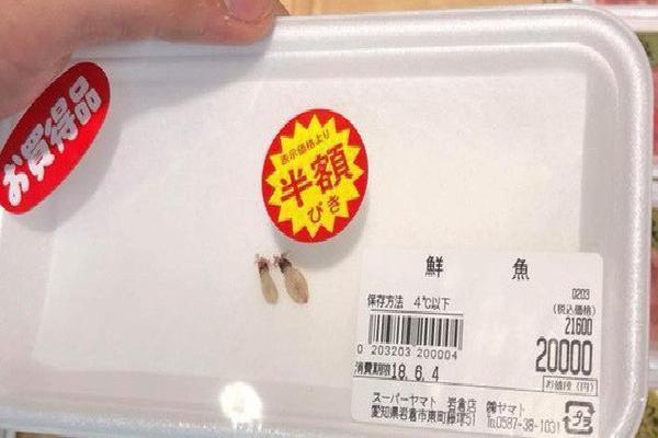 Hai chú mực một nắng to bằng con chấy có giá đến 4 triệu đồng trong siêu thị Nhật khiến dân mạng Việt xôn xao