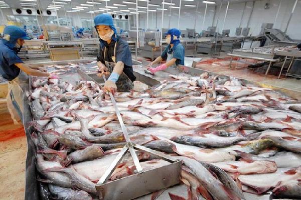 Mỗi ngày qua đi, 'vua cá tra' Hùng Vương lỗ thêm 3 tỷ đồng