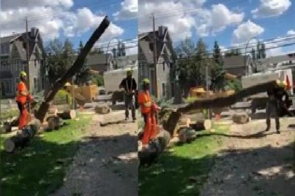 Cưa cây bất cẩn, cây bất ngờ đổ đè bẹp đồng nghiệp