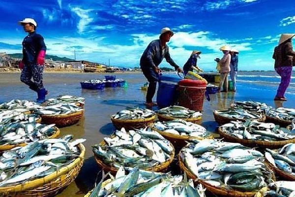 """Tháng 1/2019, EC xem xét """"thẻ vàng"""" thủy sản Việt Nam"""