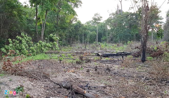 Ngoài việc cưa hạ cây, người dân còn đốt rừng để sớm có những khu đất như thế này và rao bán với giá 1,5 tỷ đồng mỗi công. Ảnh: Việt Tường.