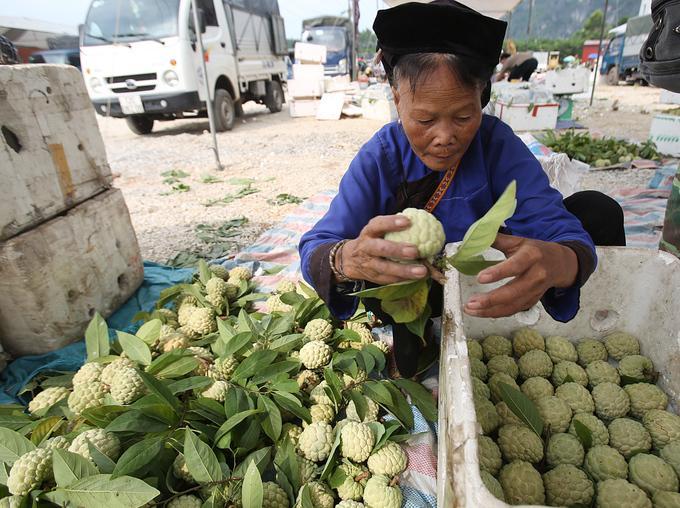Bà Làn làm công việc phân loại na. Sau 4 giờ buổi sáng bà thu về khoảng 200.000 đồng.
