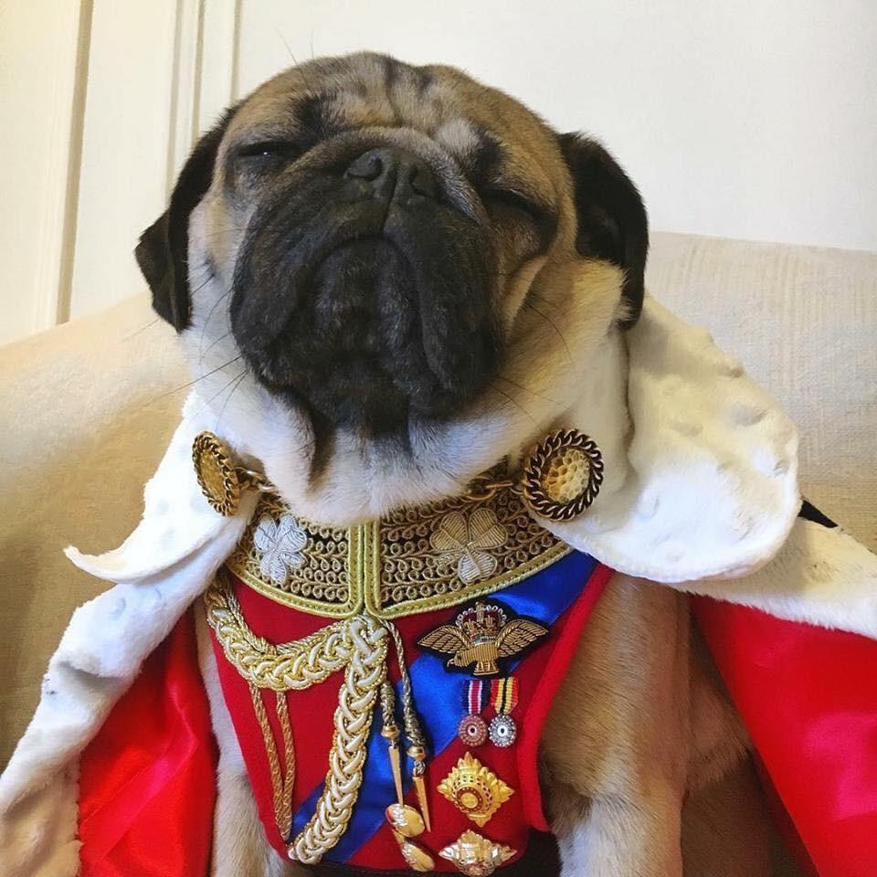 Rich dog thuộc dòng dõi hoàng tộc.