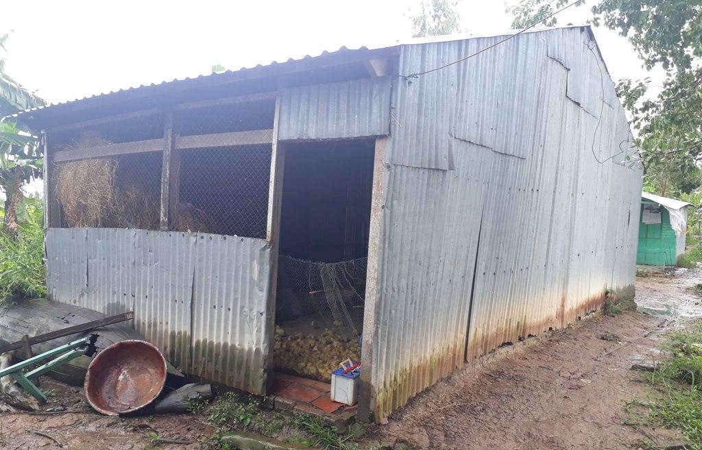 Căn nhà của Thanh tại ấp Tân Thành, nằm biệt lập giữa cánh đồng giờ trở thành nơi chăn nuôi vịt (Ảnh: Thanh Lâm).