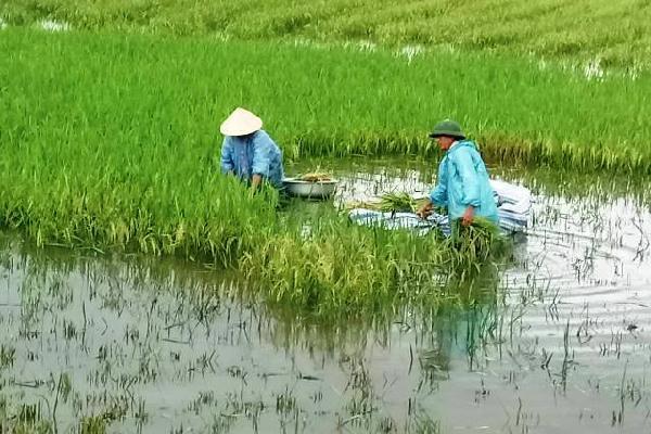 Bão số 3: Thanh Hóa chạy cắt lúa non, Hải Phòng điều xe thiết giáp