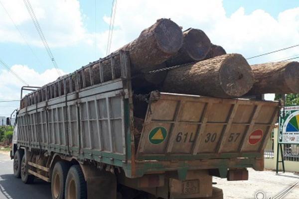 Một loạt kiểm lâm 'nhúng chàm' vụ trùm gỗ lậu Phượng 'râu' bị bắt