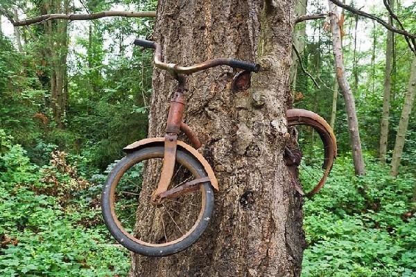 Bí ẩn cây ăn xe đạp chưa có lời giải đáp