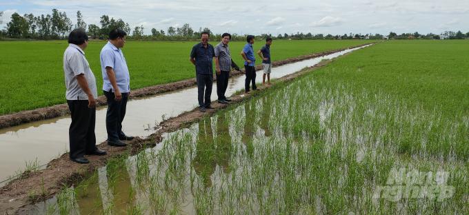 Đoàn kiểm tra do ông Phạm Thanh Hải (thứ 4 từ trái sang), Phó Giám đốc Sở NN-PTNT tỉnh Bạc Liêu, kiểm tra lúa vừa xuống giống hơn 3 tuần tại Phường Láng Tròn (TX Giá Rai). Ảnh: TL.