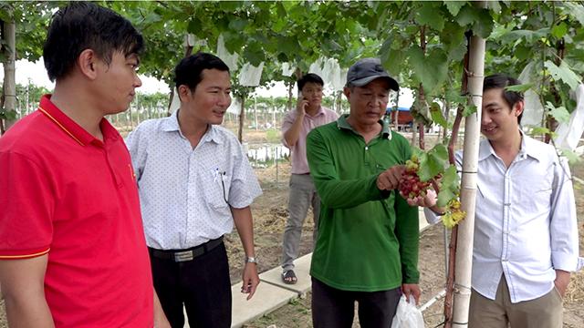 Ông Tuấn (thứ 2 từ phải sang) giới thiệu giống nho 3 màu với lãnh đạo địa phương và khách tham quan