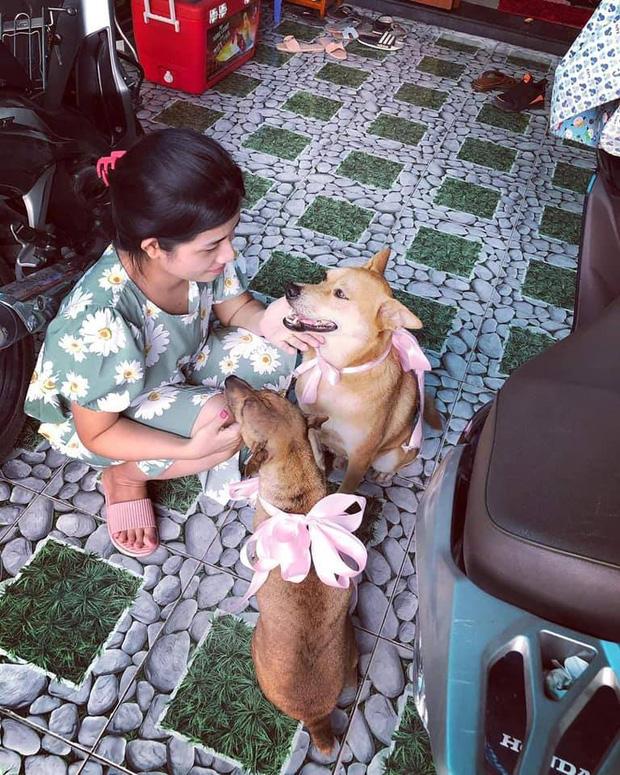 2 chú chó được buộc nơ cực bảnh trong đám cưới (Ảnh: FB Phương Quang)