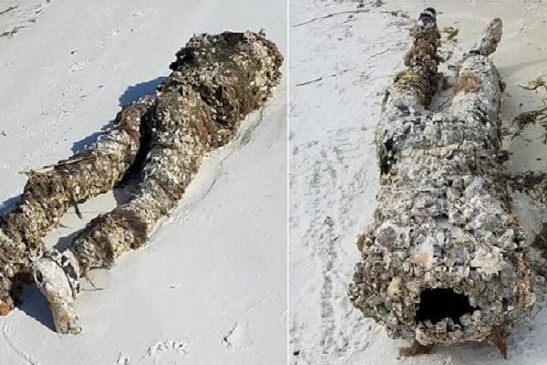 Đang dọn rác trên biển thì phát hiện thi thể không đầu, người phụ nữ hoảng loạn gọi cảnh sát và cái kết chưng hửng cho tất cả