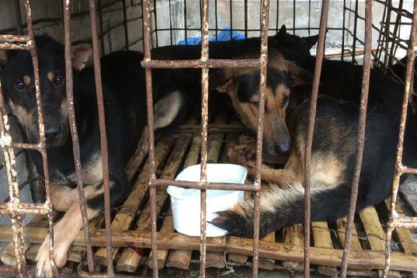 2 người dùng xe biển số giả đi trộm 9 con chó