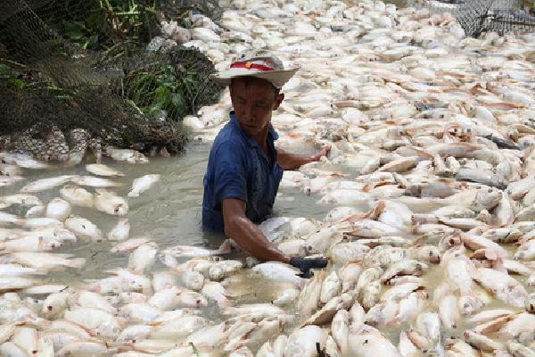 Nước nơi 1.500 tấn cá chết trên sông La Nga có khí độc vượt mức
