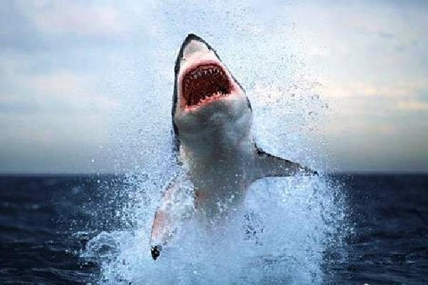 Ngư dân bị cá mập tấn công ở Hải Phòng