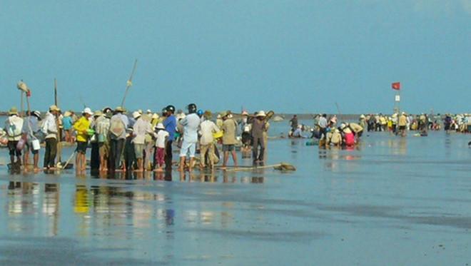 Hàng trăm người đổ xô đi cào nghêu giống ở Cà Mau