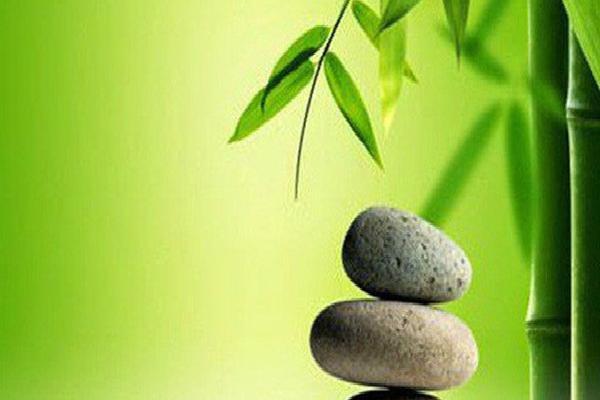 3 bài học đáng suy ngẫm về thành công mà tôi học được từ 'cuộc đời của cây tre'